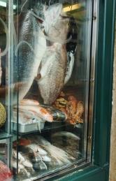 Fresh catch in a seaside city